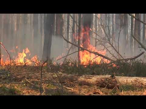 Полиция расследует два дела в связи с пожарами в зоне ЧАЭС, один поджигатель установлен