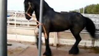 grupo laberinto caballos famosos mix dj gavilan