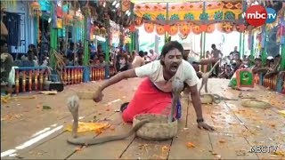 Watch: Snake Playing In Odisha|| Poisonous Snake Cobra Played By Snake Charmers || Audience Reaction