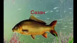 Название рыб на чувашском