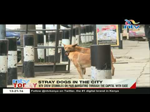 Stray dogs spotted navigating through the city with ease