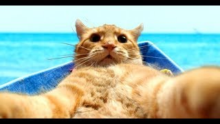 Смешные Kошки и Милые Котята 2019 ♥ Cat Marabacha #25