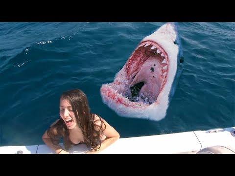 è caduta nell'acqua degli squali e...