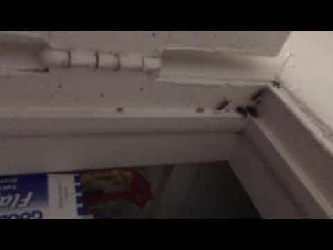 Kitchen Pantry Full of Cockroaches in Matawan, NJ