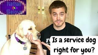 How To Determine If A Service Dog Is Right For You