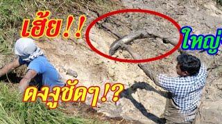#เจอ!!สระแบบนี้สูบจับปลาเจอ!!ทั้งตัวใหญ่แถมเจอ!!ดงงู,ดงปลาไหล ชัดๆใหญ่สุดตั้งแต่เคยสูบมา!?ฮากระจาย