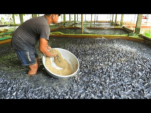 , title : 'Medicated Feeds for Hybrid Magur Fish Farming Business   Catfish Farming