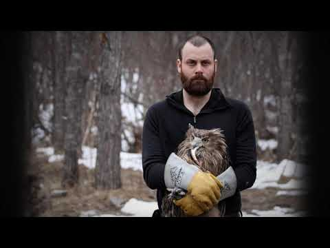 A Quest to Find and Save the Worlds Largest Owl