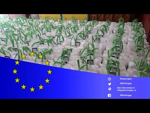 Día de Europa solidario: entrega de canastas 2021