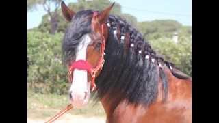 Finca Barroco,VK-Pferd,EXTREÑADOR, PRE, 5 Jahre, VERGEBEN, Video 1