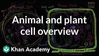 Grade 7 Science | Overview of animal and plant cells| Khan Academy