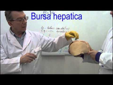 Стоимость лечения от гепатита с в екатеринбурге