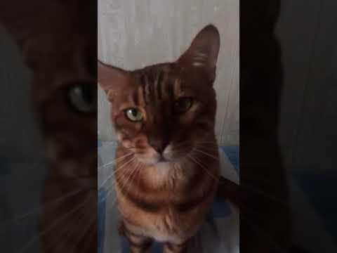 Кот нападает на камеру