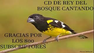 Descargar CD de Rey Del Bosque Cantando Media Hora