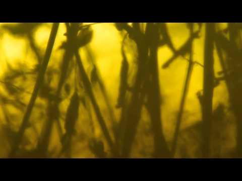 Jozef Van Wissem & Jim Jarmusch - Flowing Light Of The Godhead