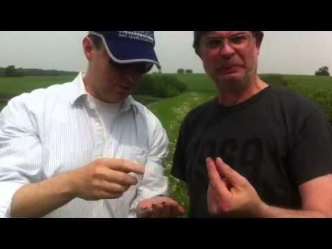 Die Symptome der Würmer beim Menschen der Tablette