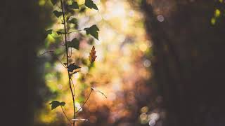 Sunset Moments - Autumn Leaves