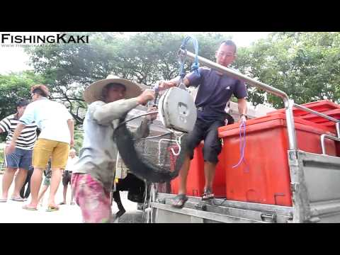 FishingKaki.com – Pasir Ris Pond Transformed: Unloading of Fish