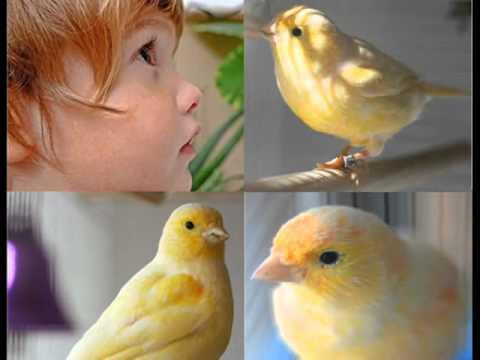 Música El niño y el canario