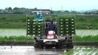 Indonesia Juga Punya Mesin Penanam Padi Seperti Jepang