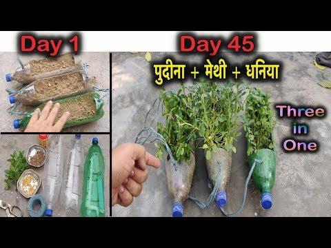 कैसे लगाए पुदीना + मेथी + धनिया एक साथ बेकार बोतल में ।Hanging Gardening l No Space Gardening