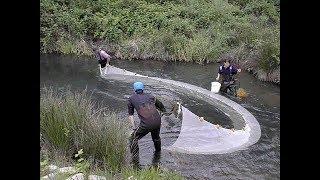 Ловля рыбы бреднем