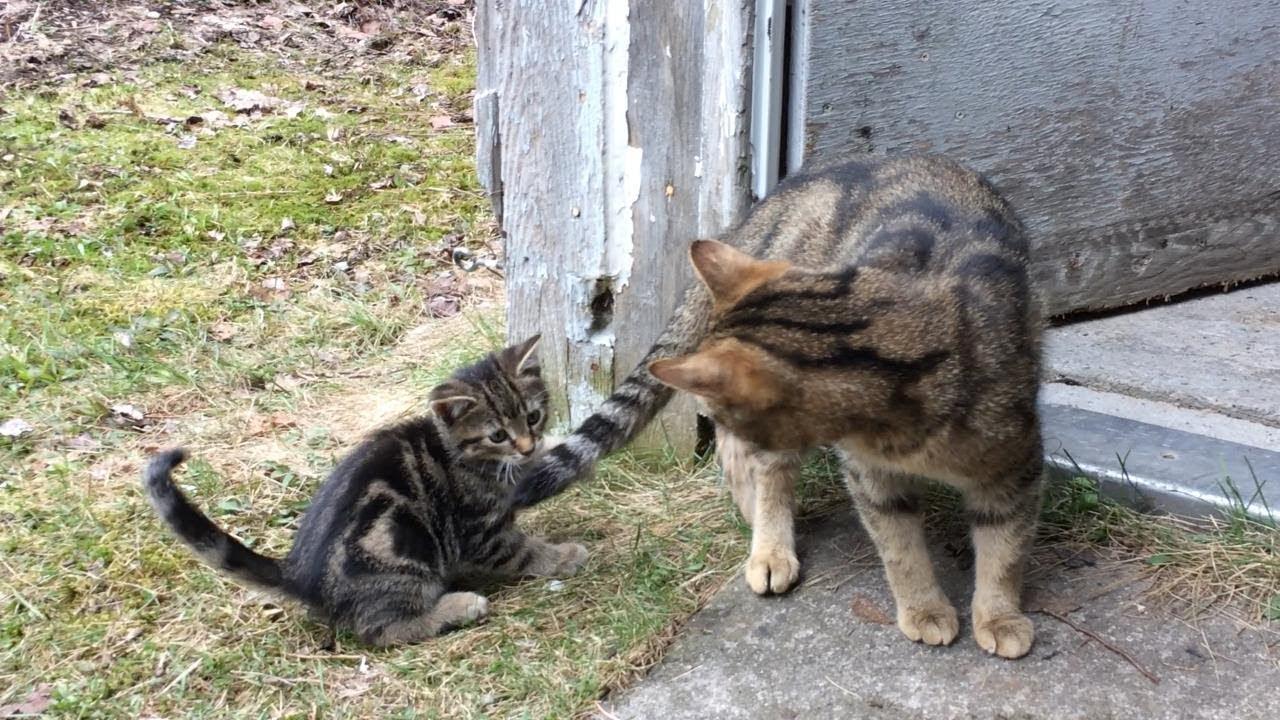 Милый маленький котенок  был наказан мамой кошкой фото