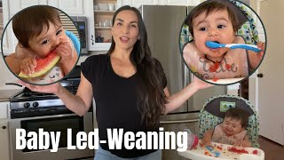 BABY LED WEANING / TABLE FOOD ONLY / NO TEETH NO PROBLEM / STAY AT HOME MOM