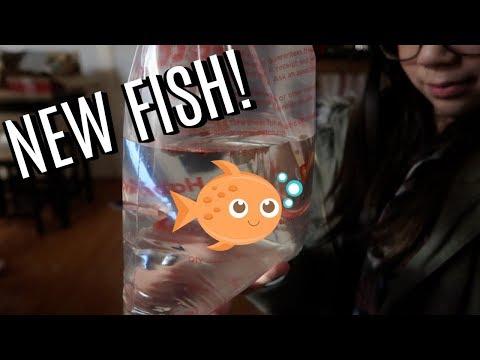 WE GOT NEW FISH! - November 20, 2017