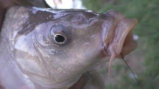 Рыбалка . Ловля карпа на поплавок. My fishing
