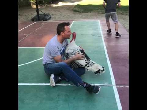 0 Dog Wants The Hugs Turkey Gets