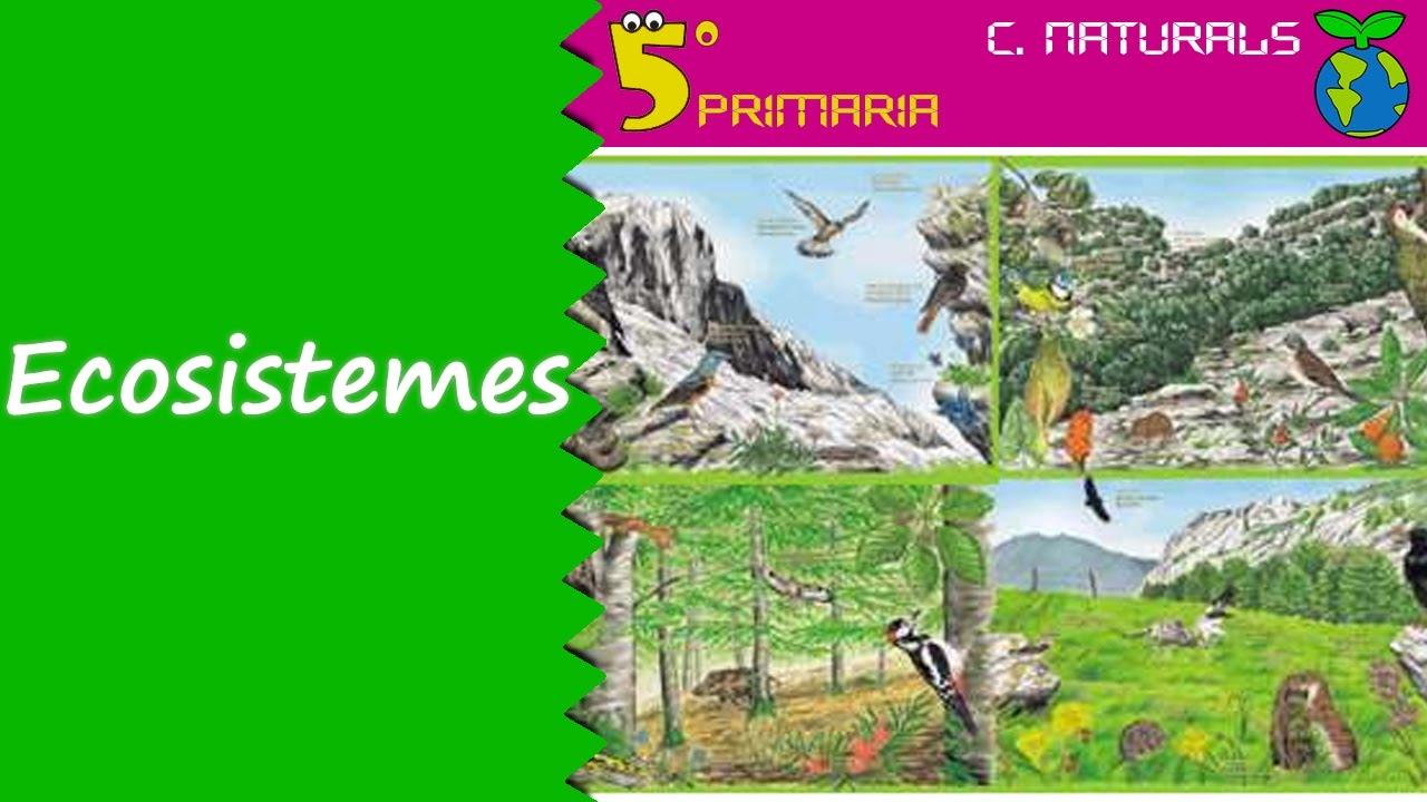 Ecosistemes. Naturals, 5é Primària. Tema 6