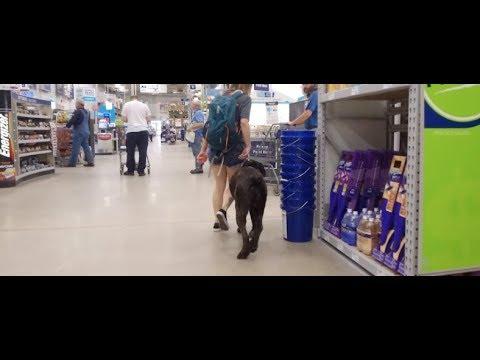 Best Dog Training in Columbus, Ohio! 2 Year Old Cane Corso, Sage!