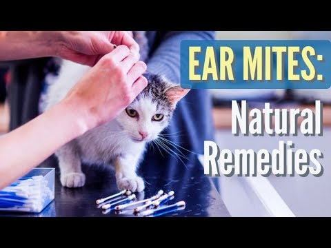 Video Ear Mites in Cats and Dogs: Natural Solutions