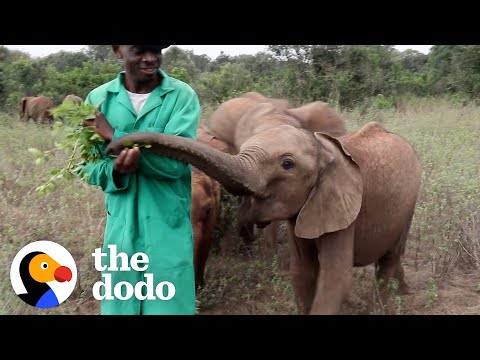 These Reserve Keepers Formed Lifelong Bonds with Elephants