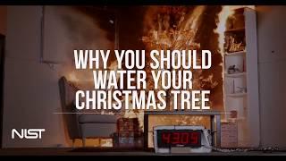 Die besten 100 Videos Warum man Christbäume wässern soll