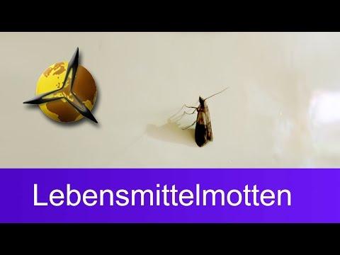 Video mit malyschewoj über die Parasiten Videos
