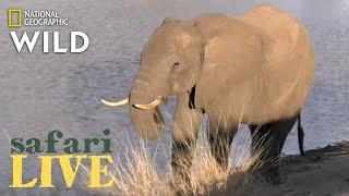 Safari Live - Day 191 | Nat Geo Wild
