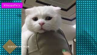 Funniest Cute Cats Compilation 2019 | Cute is More than Enough | HappyPets #9