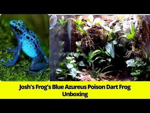 Josh's Frog's Blue Azureus Poison Dart Frog Unboxing