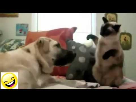 Divertidas Situaciones Domésticas De Perros y Gatos