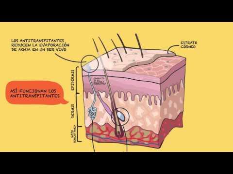 ¿Cuál es el mejor momento para usar antitranspirante?