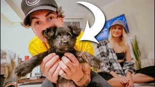 VLOG // MEETING THE NEW PUPPY!!