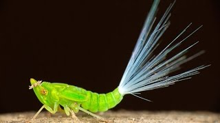 Top 10 Most Beautiful Insects