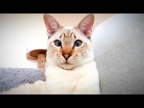 Happy International Cat Day 2020!!!