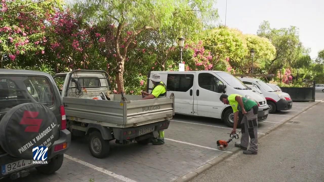 Se suceden a diario las labores de poda de palmeras, limpieza y desbroce