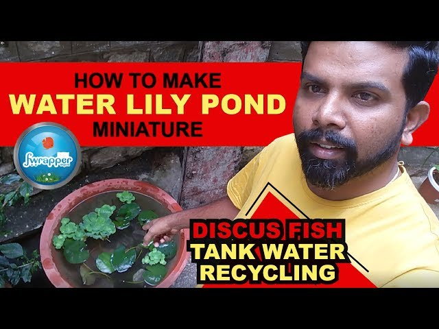 Water Lily Pond Miniature || Discus Fish Tank Water Recycling