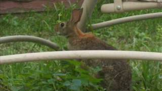 Happy Easter (Peter Cottontail).wmv