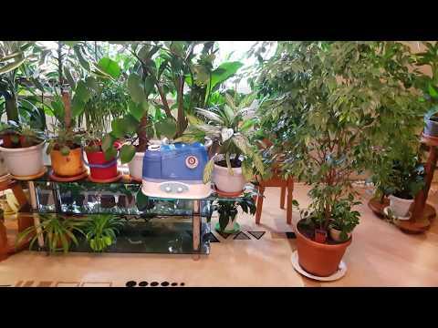 Домашние растения. Как мы пережили зиму... Обзор растений в марте..