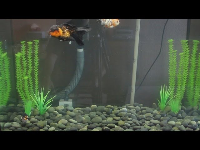 New Goldfish Tank